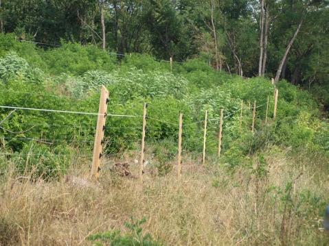 Vinex villanypásztor erdősítés védelme