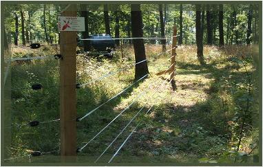 Vinex villanypásztor erdő védelem