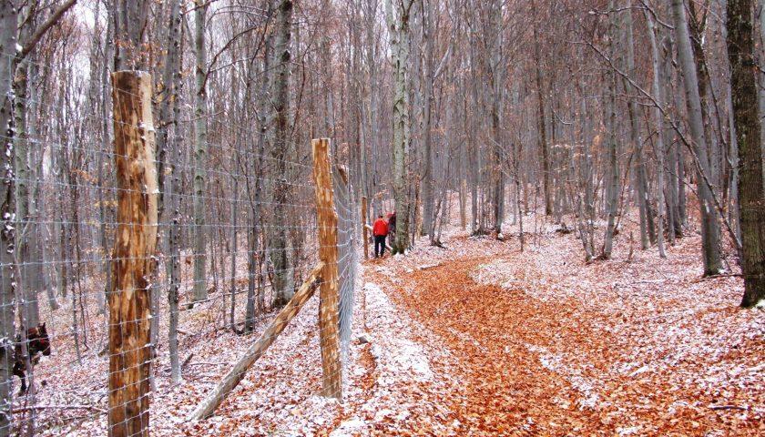 Erdély erdő védelem Vinex